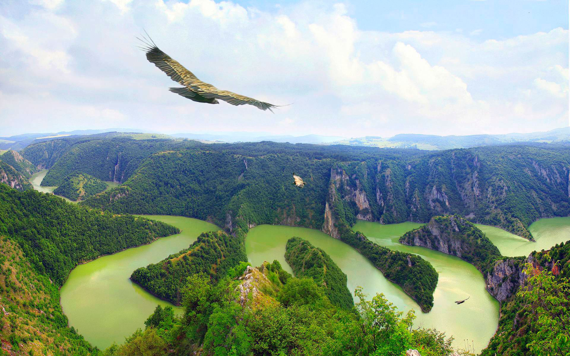 Eagle soaring above the beautiful canyon Uvac in Serbia